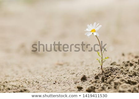 green plant on sand Stock photo © Paha_L