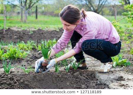 женщину лук органический растительное саду Сток-фото © stevanovicigor