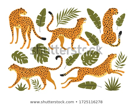Set of cheetahs and tigers Stock photo © bluering