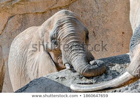 Baby Elephant in between the herd. Stock photo © simoneeman
