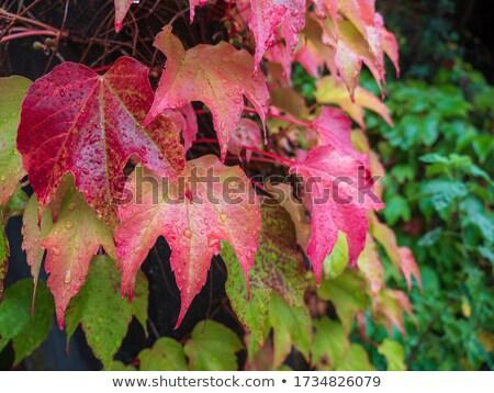 季節 シアトル 季節の 葉 秋 ストックフォト © Rigucci
