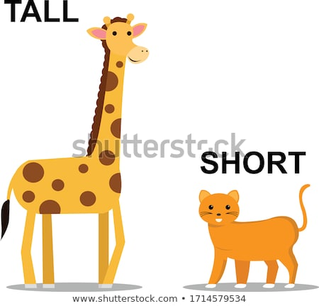 A tall giraffe Stock photo © bluering