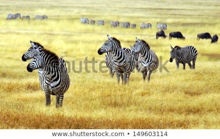 野生動物 サバンナ フィールド 実例 自然 風景 ストックフォト © bluering