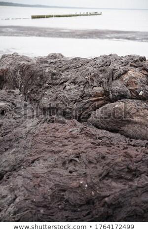 Wodorost plaży morze bałtyckie pokryty warstwa wody Zdjęcia stock © marekusz