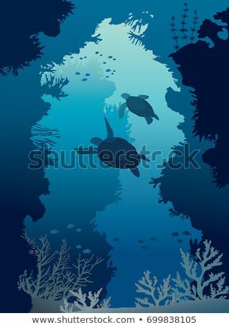 Stock fotó: Kettő · teknősök · úszik · tenger · illusztráció · víz