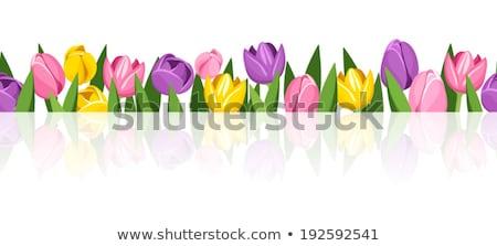 turva · tulipas · campo · rosa · flores · verde - foto stock © beholdereye