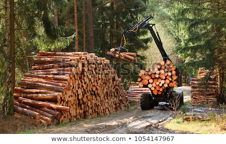 Technology and forest industry Stock photo © sdCrea