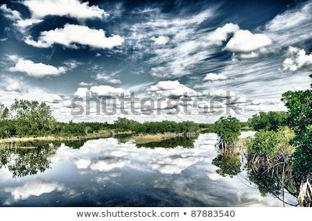 Hdr atış doğal su ağaç manzara Stok fotoğraf © hamik