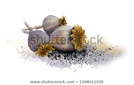 poppy seeds and dried seed heads Stock photo © Digifoodstock