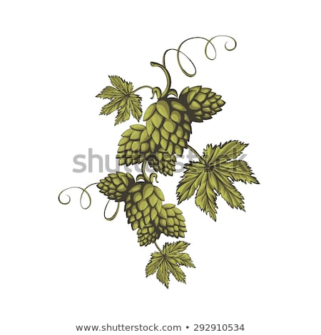 Hop organisch kruid plant gebruikt brouwerij Stockfoto © frescomovie