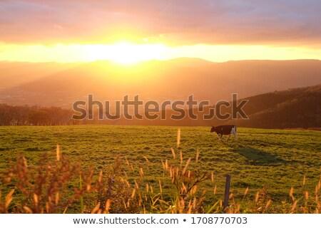 puesta · de · sol · solitario · caballo · campo · flor - foto stock © fogen