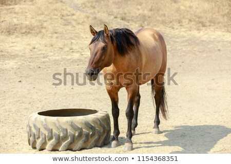 Brown horse with black mane standing in Horse Hill Preserve on a summer day. Stock photo © yhelfman