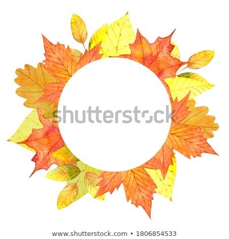 golden autumn season Stock photo © alexaldo