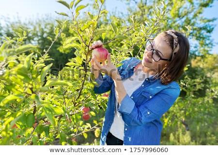 Farmer woman in fruit orchard holding apple in her hands Stock photo © Kzenon