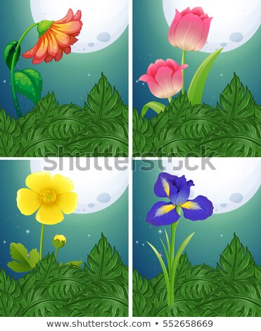 Different types of flowers on fullmoon night Stock photo © colematt