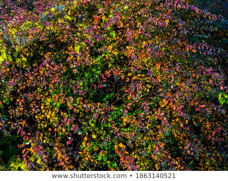 orange and red color trees and multicolor bushes stock photo © robuart