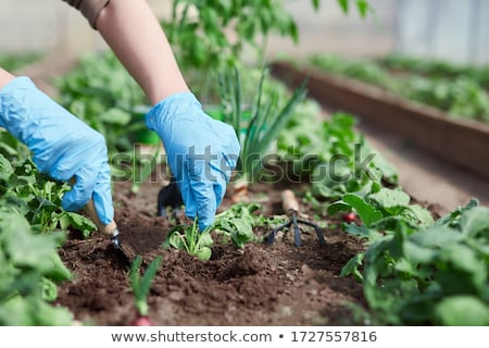 Gardening and planting concept Stock photo © brebca
