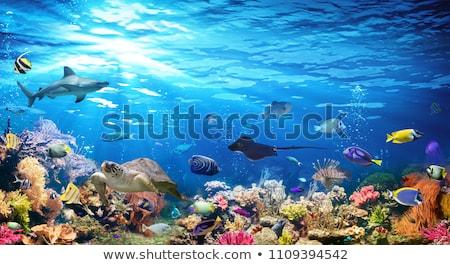 Trópusi hal tenger víz hal élet vízalatti Stock fotó © galitskaya