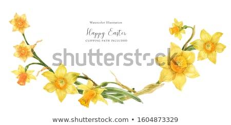 Fleur jonquille blanche Pâques nature jardin Photo stock © bdspn