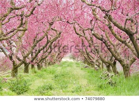 Geçit kırmızı meyve ağaçlar çiçek çiçek Stok fotoğraf © ElenaBatkova