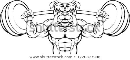 Bulldog mascotte gewichtheffen lichaam bouwer hond Stockfoto © Krisdog