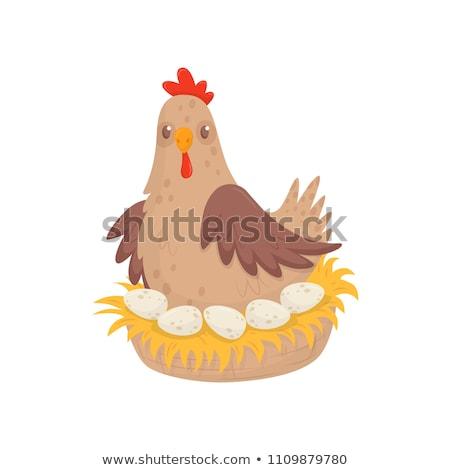 Pollo uova illustrazione cartoon bianco nero uccello Foto d'archivio © tiKkraf69