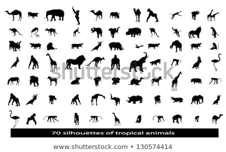 Afrikaanse dieren nacht silhouetten wilde dieren savanne Stockfoto © liolle