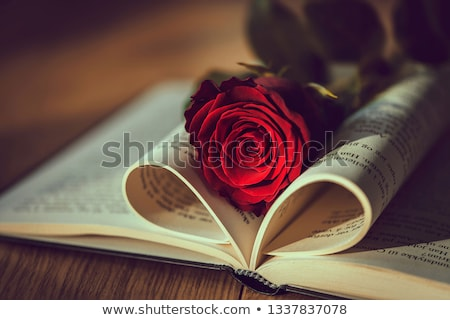 red rose on the book  Stock photo © inaquim