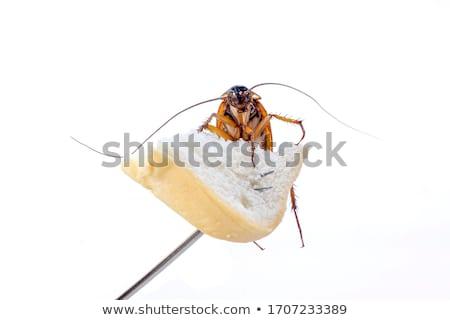 Hamamböceği dilim ekmek beyaz Stok fotoğraf © ivelin