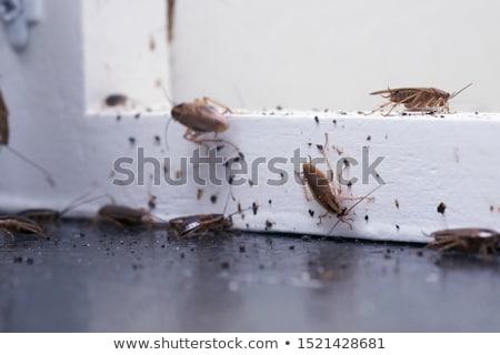 Hamamböceği beyaz korku Stok fotoğraf © ivelin