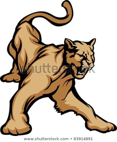 Сток-фото: Cougar Mascot Body Vector Illustration