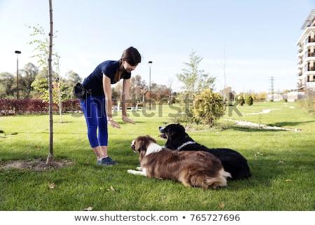 köpekler · okul · avustralya · çoban · köpek - stok fotoğraf © chrisjung