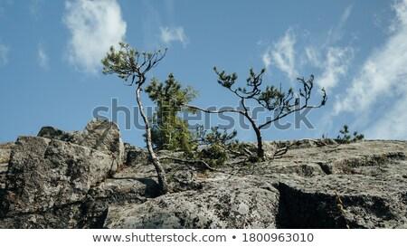 fa · szirt · fekete · sziluett · narancs - stock fotó © mayboro