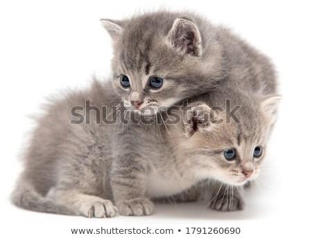 iki · kedi · yavruları · oturma · çim · yakın · birlikte - stok fotoğraf © andriy-solovyov