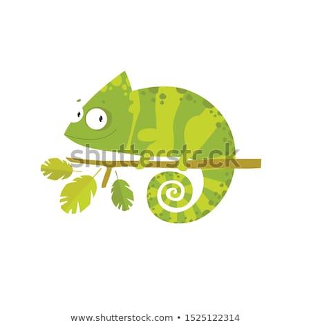 bonitinho · camaleão · ilustração · verde · desenho · animado · lagarto - foto stock © dagadu