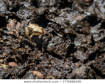 common toad in wet ambiance stock photo © gewoldi