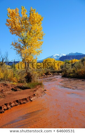 jaune · laisse · radeau · boueux · rivière · automne - photo stock © emattil