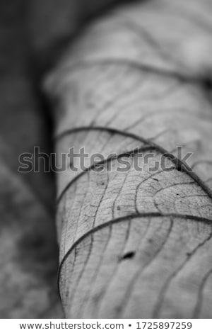 Display fragile foglie alberi fiori albero Foto d'archivio © emattil