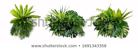 緑色の葉 · 春 · 壁 · 抽象的な · 葉 · 背景 - ストックフォト © leonardi