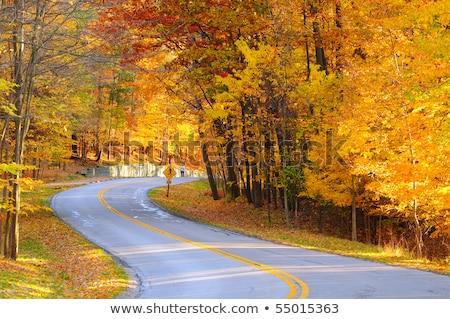 carretera · brumoso · otono · día · árbol · forestales - foto stock © inxti