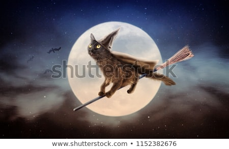 halloween · cadı · uçan · süpürge - stok fotoğraf © carlodapino
