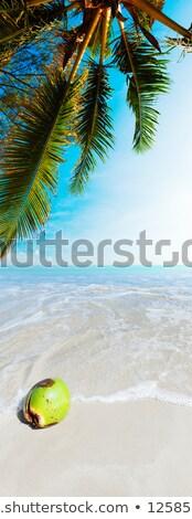 Stockfoto: Kokosnoot · zand · verticaal · panoramisch · strand · boom