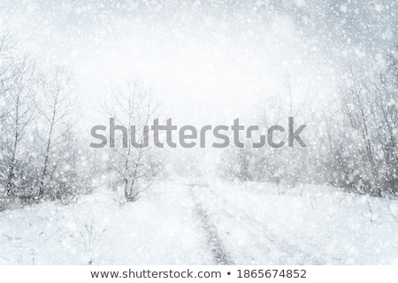 winter blizzard stock photo © markhayes