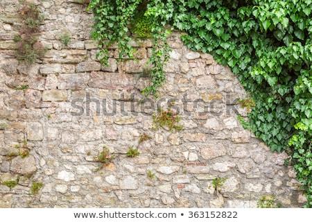 Lierre mur de pierre luxuriante vert partiellement texture Photo stock © jkraft5