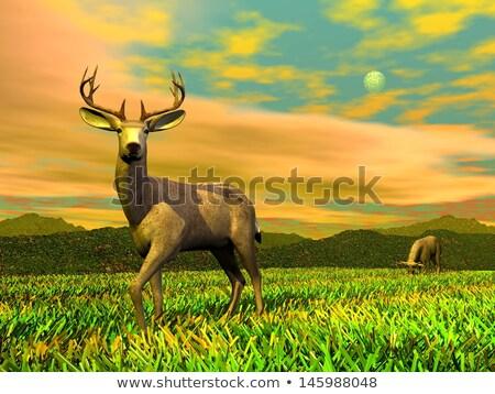 Vigilant buck - 3D render Stock photo © Elenarts