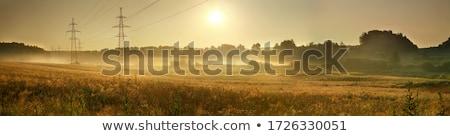 blauwe · hemel · groen · gras · lopen · groene · veld - stockfoto © pzaxe
