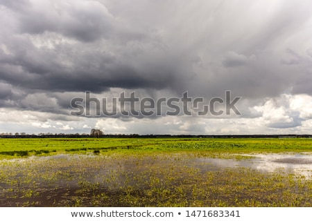 dark cloudy sky and green grass stock photo © premiere