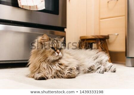 Cat stufa divertente guardare giovani Foto d'archivio © vetdoctor