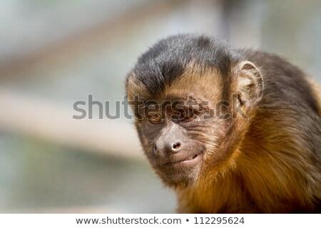 猿 · 赤ちゃん · 草 · 顔 · 自然 · 子 - ストックフォト © pxhidalgo