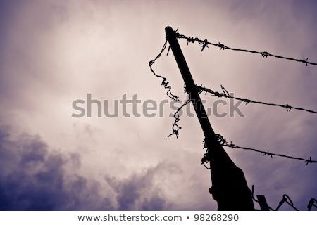 dikenli · tel · çit · hapis · siluet · bekçi · dizayn - stok fotoğraf © stevanovicigor